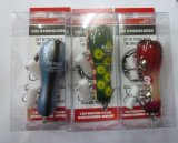 シビレカブリ 魚矢限定カラー